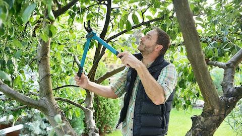 Mann kutter av grener på et stort tre i hagen.